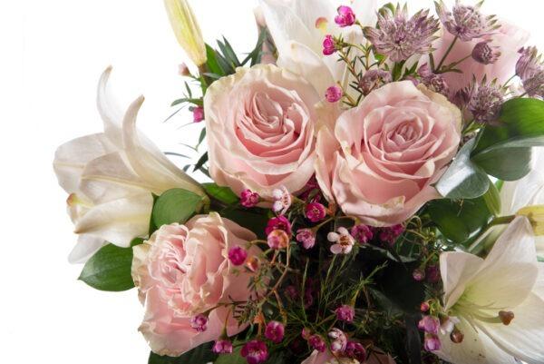 Rosa delicadeza