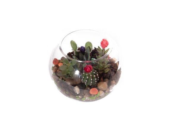 Pecera-Cactus