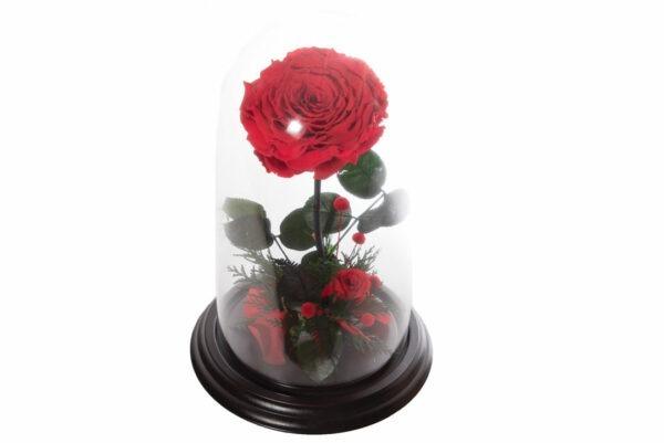 Rosa Roja Eterna